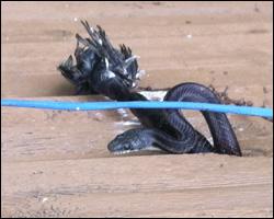 Snake control in Sterling VA