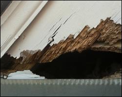 Squirrel damage in Sterling VA