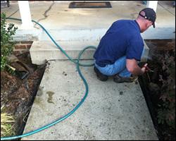 Dead animal removal Sterling VA